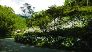 estrada de Minas
